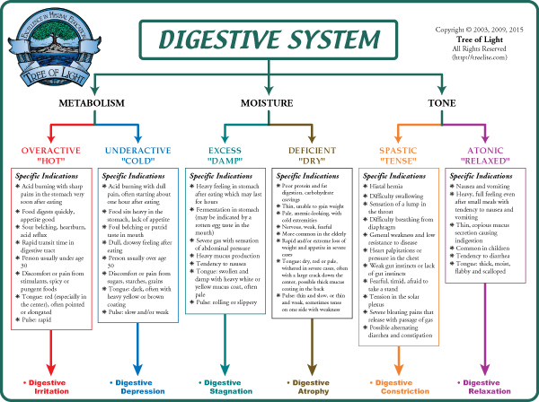 Diagram of the enzyme in gi wiring diagram for light switch human digestive system flow chart image collections chart design rh collegepaperwriters info enzyme diagram activity enzyme ccuart Choice Image