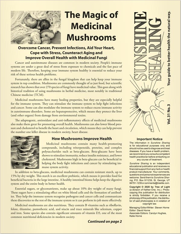 The Magic of Medicinal Mushrooms
